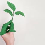 los productos térmicos de origen vegetal son en su mayoría biodegradables y reciclables